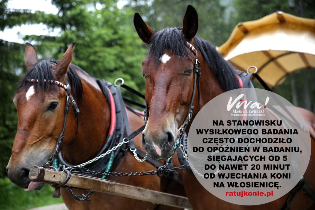 konie_morskie_oko_11