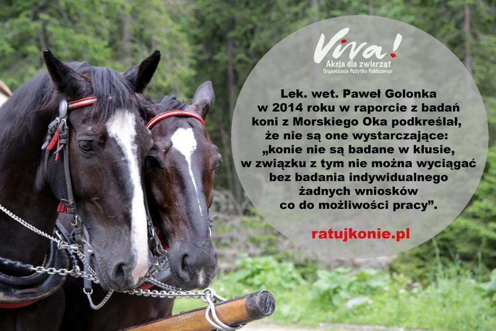 konie_morskie_oko_6
