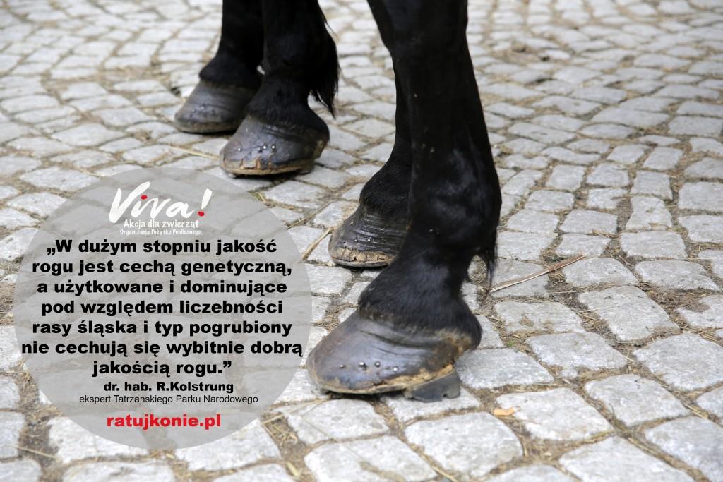 konie_morskie_oko_7